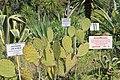 2014 Suchum, Ogród botaniczny (11).jpg