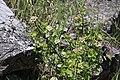 2015.05.30 11.55.27 IMG 2476 - Flickr - andrey zharkikh.jpg