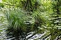 2016 Wald Jasmund 02.jpg