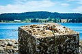 2017-06-25 East Vancouver Island (36609302386).jpg