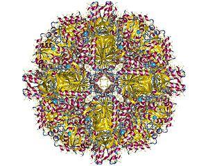 Sulfur oxygenase/reductase - Sulfur oxygenase reductase homo24mer, Acidianus ambivalens