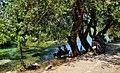 48650 Akyaka-Ula-Muğla, Turkey - panoramio (11).jpg