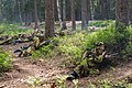 4Y1A2831 Roshchino, Russia, Reconstruction of the Kuuterselkä battle between USSR and Finland (35104291900).jpg