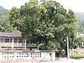 56省道边的村庄 - panoramio.jpg