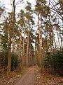 76879 Knittelsheim, Germany - panoramio (5).jpg
