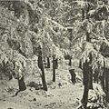 A Simla Road in Winter.jpg