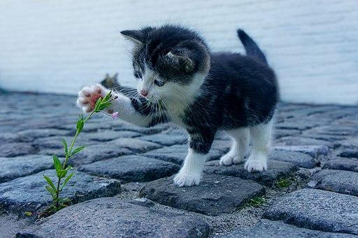 A curious kitten (Pixabay)