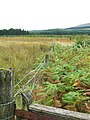 A fence between farmland and forestry land - geograph.org.uk - 1580927.jpg