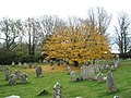 A golden glow on an otherwise dull day in Funtington Churchyard - geograph.org.uk - 1045877.jpg