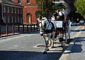 A horse drawn carriage in Philadelphia, PA..jpg