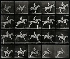 A horse jumping a hurdle. Photogravure after Eadweard Muybri Wellcome V0048754.jpg