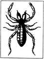 A monograph of the terrestrial Palaeozoic Arachnida of North America progress Page35 fig 39 frame.png