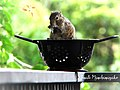 A one Hungry Squirrel.jpg
