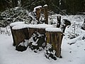 A rustic seat by a footpath at Oare Gunpowder Works Country Park - geograph.org.uk - 1144288.jpg