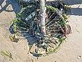 Abandoned bike wheel (10863).jpg