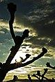 Agarrando o sol, As Cortes, parroquia de Rianxo, Rianxo, Galiza.jpg