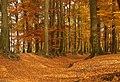 Ahaus P1015314 Buchen am Karnickelberg.jpg
