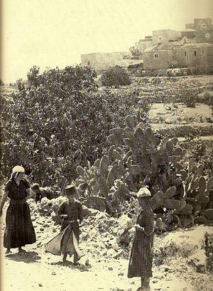 Al Jib - Al Jib, 1938-39