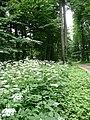 Aleja parkowa w Strzelcach - panoramio.jpg