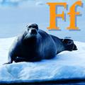 Alfabet zwierząt - literka F.png