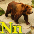 Alfabet zwierząt - literka N.png