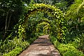 Alley lined with vegetated arches at the National Orchid Garden of Singapore.jpg