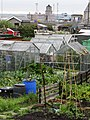 Allotment's in Prince of Wales Road, Holyhead (2).jpg
