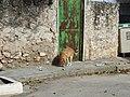 Almendros (Cuenca) Q34.jpg