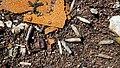 Ammunition Cases (51065754398).jpg