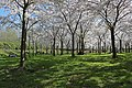 Amstelveen, Netherlands - panoramio (12).jpg