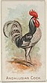 Andalusian Cock, from the Prize and Game Chickens series (N20) for Allen & Ginter Cigarettes MET DP835051.jpg