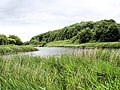 Anderton Nature Park - view up the River Weaver - geograph.org.uk - 858128.jpg