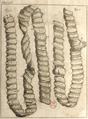 Andry - De la génération des vers (1741), planche p. 198.png