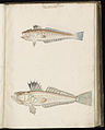Animal drawings collected by Felix Platter, p1 - (130).jpg