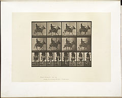 Animal locomotion. Plate 668 (Boston Public Library).jpg