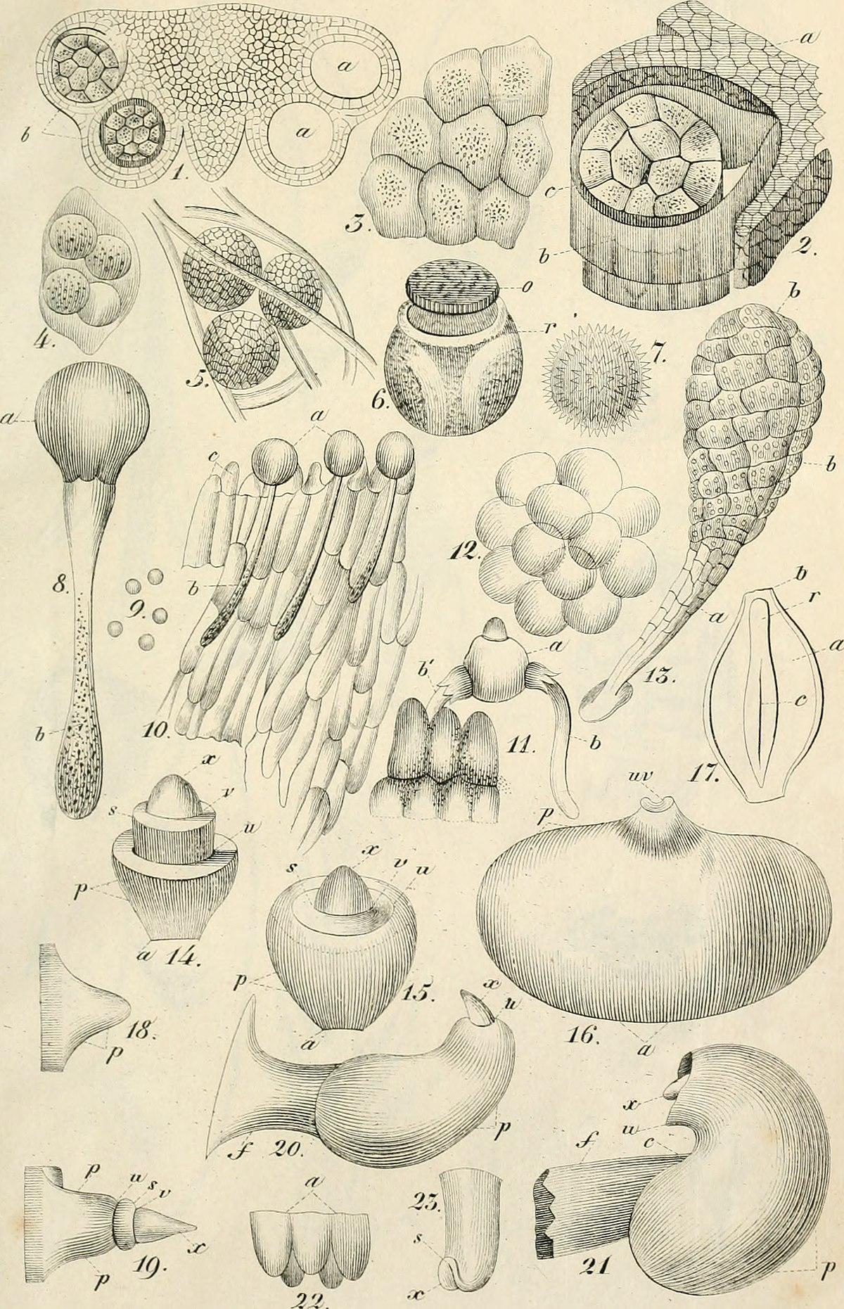 Botanik Studium