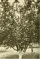 Apple growing in the Pacific Northwest; a condensation of lectures, experiments and discussions (1911) (14760973796).jpg