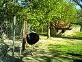April Parc Natural Freiburg Germany - Master Landscape Rhine Valley Photography 2014 Landgut Mundenhof Strauß - panoramio.jpg