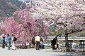 Arashiyama 2009-04-09 (3666355587).jpg