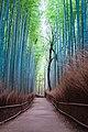 Arashiyama Bamboo Grove (44050138950).jpg