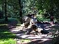 Arboretum, Kórnik 2010 (25).jpg