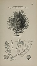 Arboretum et fruticetum britannicum, or - The trees and shrubs of Britain, native and foreign, hardy and half-hardy, pictorially and botanically delineated, and scientifically and popularly described (14783925215).jpg
