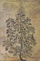 Artemisia monoklônos 20r Dioscoride Vienne.png