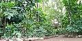 Arusha living garden.jpg