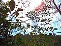 Arvores em meio ao sol.JPG