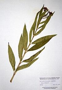 Asclepias incarnata ssp. incarnata BW-1979-0723-9881.jpg