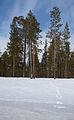 Askeleita lumessa.jpg