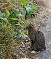Attentive cat, Tisbury - geograph.org.uk - 1398731.jpg