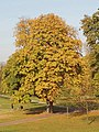 Autumn colour in Kensington Gardens - geograph.org.uk - 593126.jpg