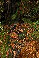 Autumn foliage 2012 (8252576625).jpg